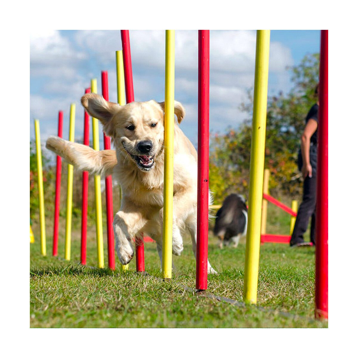 Agility set voor honden