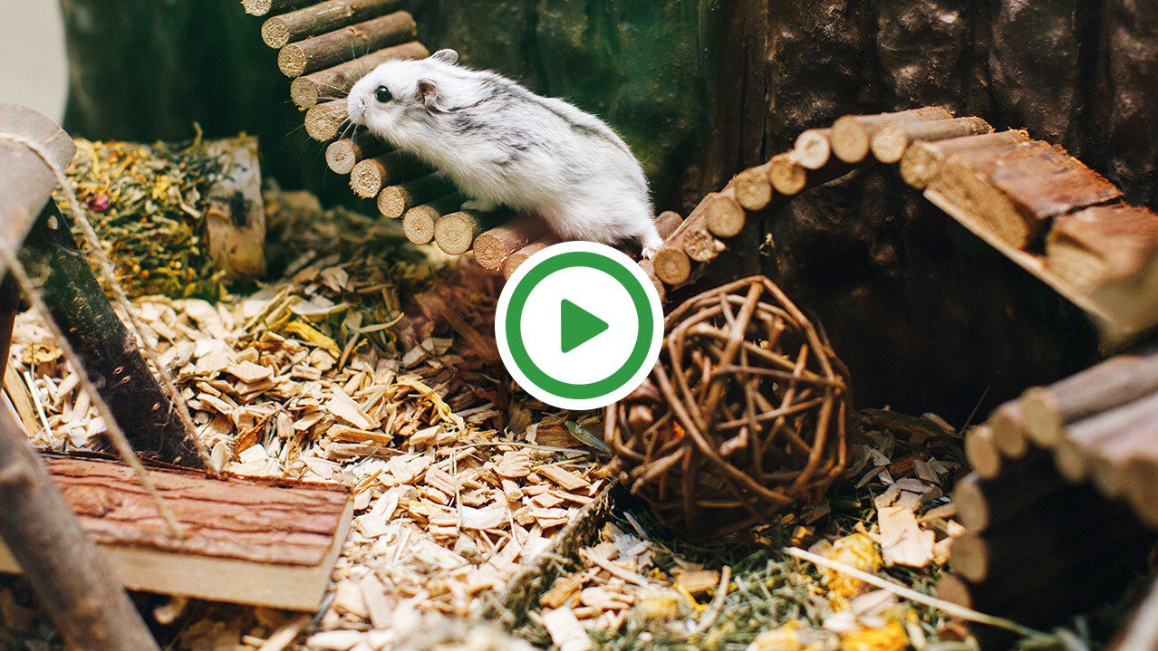 20191101 - hamsterscaping.jpg